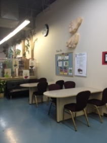 Our study area. Has been use with the kitchen for birthday parties, a dance and Easter dinner.
